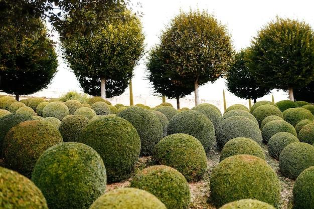 프랑스에서 가까운 회양목 공이있는 조경 된 정원. 녹색 분야.