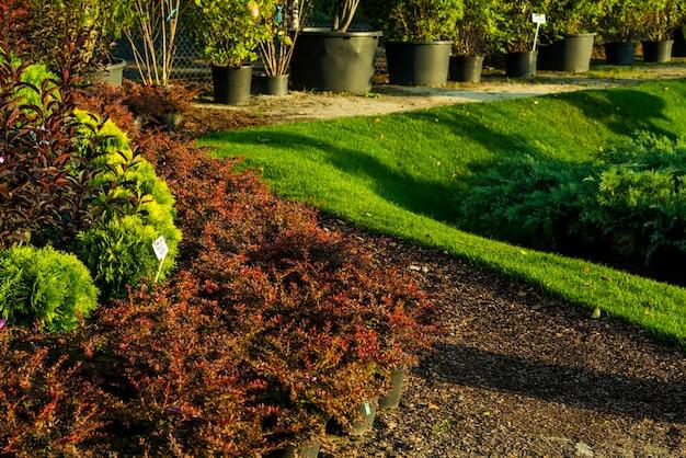 야외에서 관목과 녹색 잔디가있는 클럽에 조경 된 오크 나무 껍질