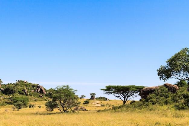 Пейзажи саванны серенгети. танзания, африка