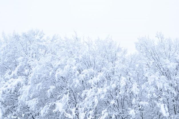 Пейзажи зимнего леса с падающим снегом - парк чудес с снегопадом. снежный зимний пейзаж