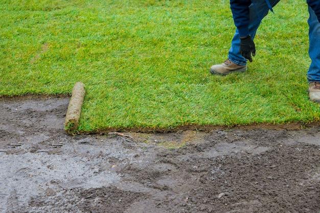 ロールで裏庭の緑の芝生の草に新しい芝を敷設する造園
