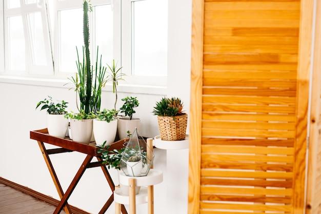 アパートやオフィスの造園、屋内植物、植木鉢、照明