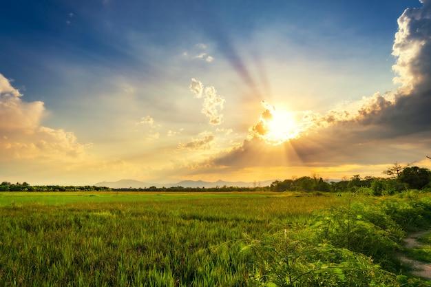 Ландшафт поля луговой и красивый закат