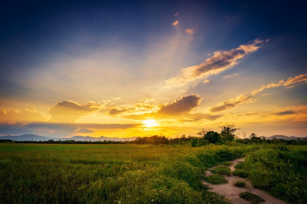 フィールドの牧草地と美しい夕日の景観