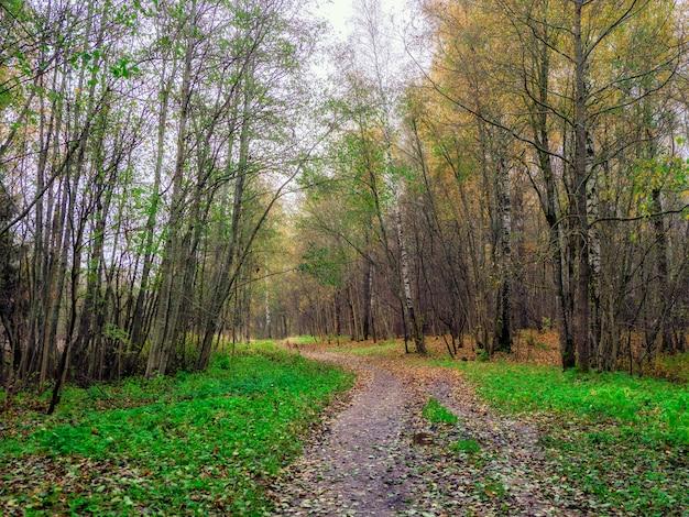 春の霧の森を抜ける車線。
