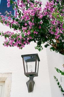 핑크 꽃 덤불 아래 집 벽에 랜턴
