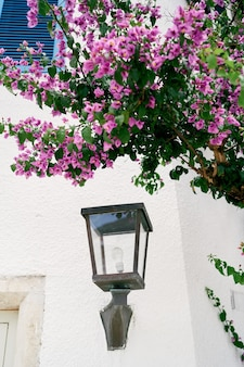Lantern on the wall of the house under a bush of pink flowers