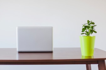 Laptop and plant in pot on table