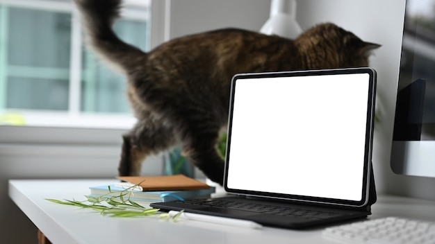A laptop and cat on white desk.