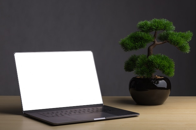 Laptops with bonsai on the table the backdrop is a dark gray background.