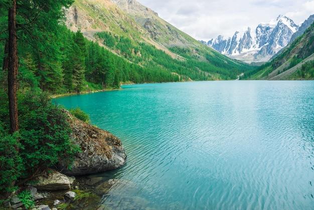 Larch on shore of azure mountain lake.