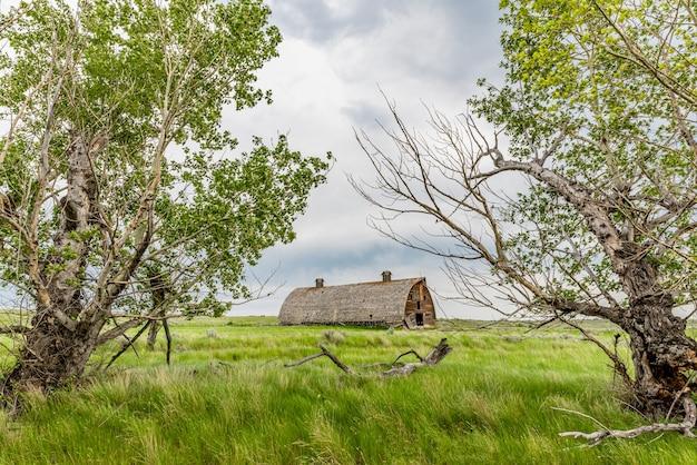 2本の木に囲まれたサスカチュワン州の大草原にある大きな放棄された納屋