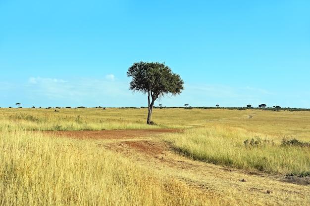 東アフリカの開いたサバンナ平原にある大きなアカシアの木