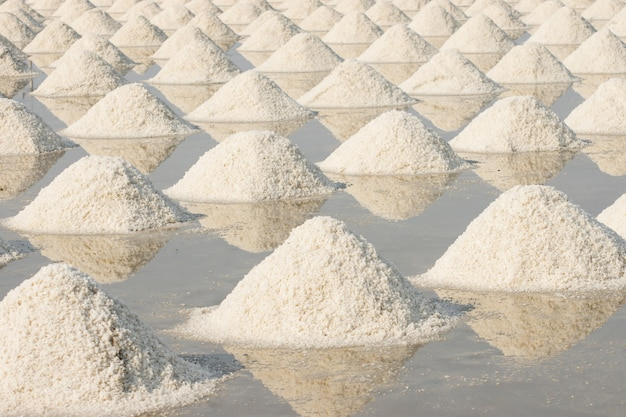 Large amounts of salt piled up in the fields.