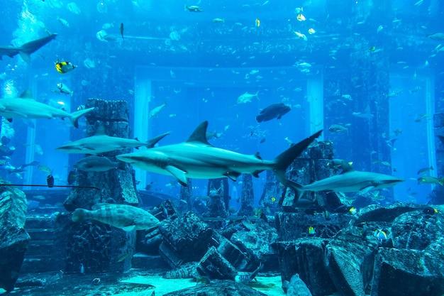 Большой аквариум в дубае в объединенных арабских эмиратах