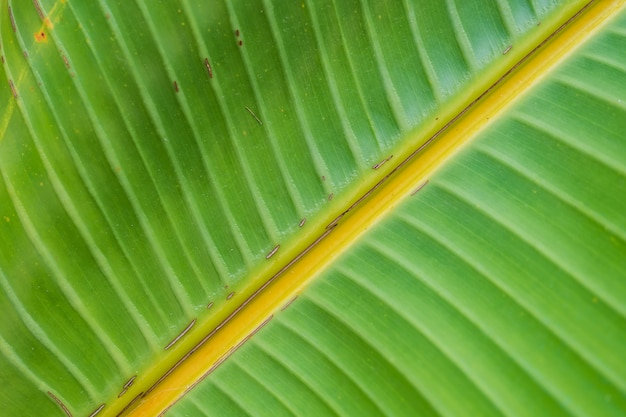 Large beautiful wet green leaf - perfect natural background
