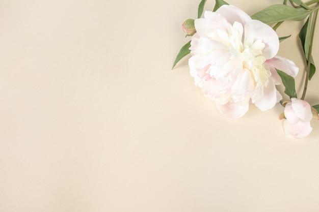 텍스트를 위한 공간이 있는 밝은 종이 배경에 큰 베이지색 분홍색 모란 꽃. 결혼식, 어머니의 날, 생일 및 기타 인사말을 주제로 한 인사말 카드 디자인을 위한 이미지