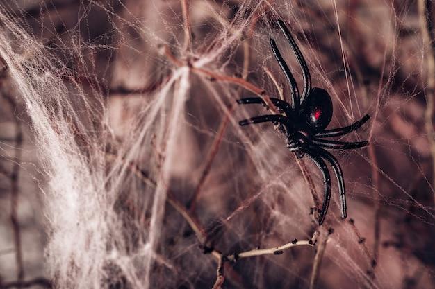 큰 검은 거미와 거미줄. 할로윈 배경