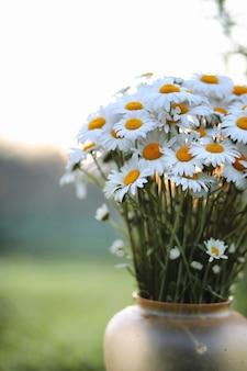 Большой букет полевых ромашек в вазе на фоне заката