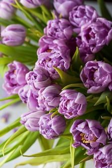 Большой букет весенних фиолетовых тюльпанов на солнце