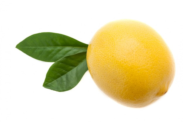 A large bright fresh lemon with two green leaves on a white back