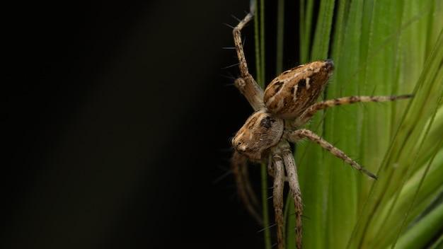 배경이 흐릿한 숲에서 식물을 내려가는 큰 갈색 거미