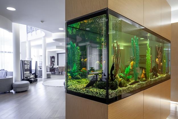 Большой встроенный аквариум с рыбками и растениями в стильной гостиной.