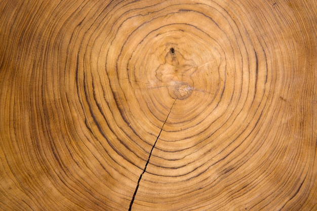 Large circular piece of wood cross section with tree ring texture background