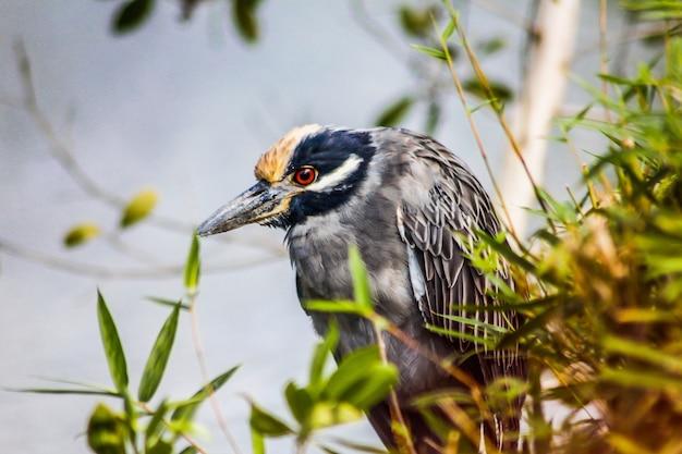 Большая птица темного цвета погружается в природу доминиканской республики