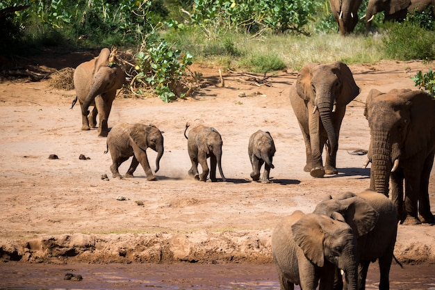 A large elephant family is on the bank of a river