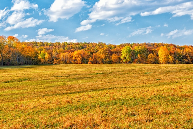 A large field surrounded by a forest area in autumn sometimes