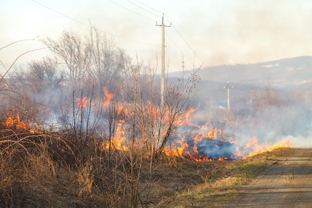A large fire flame destroys dry grass and tree branches along the road.