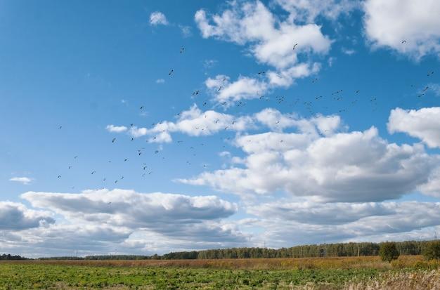 晴れた日には、大群の鳥が空を飛んで、雲が野原を越えます。鳥の渡り