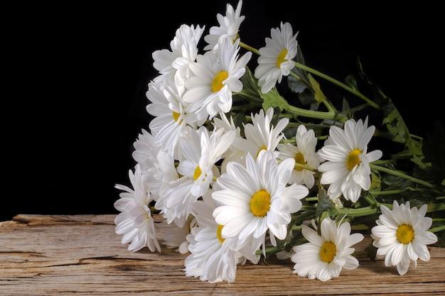 木製の背景に白いカモミールlevcantemellaの大きな花。