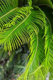 ヤシの木の大きな緑の葉、上面図。美しい質感。