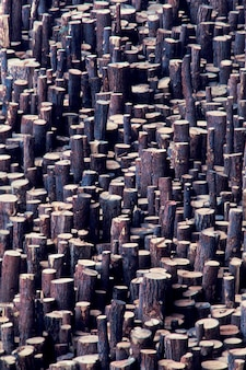 Large group of logs stored for lumber
