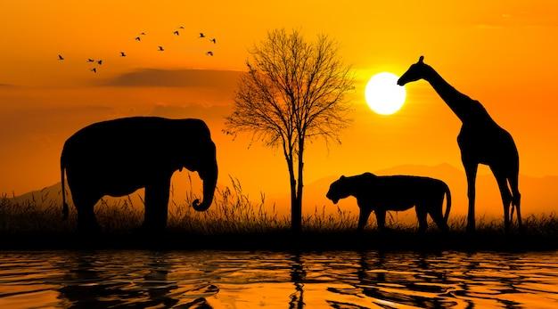Большая группа африканских сафари животных. концепция сохранения дикой природы