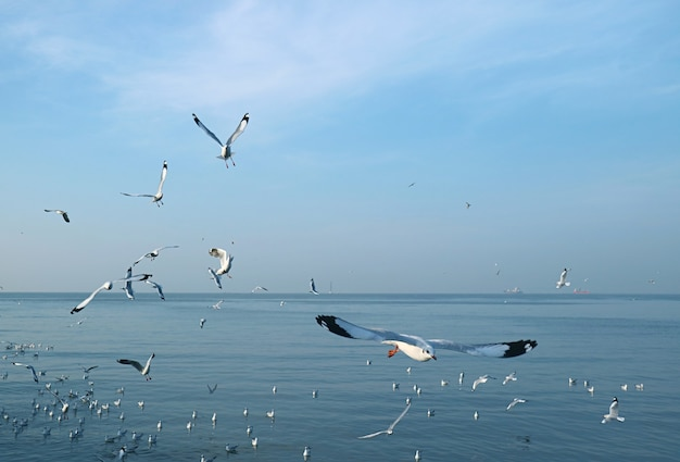 Large group of seagulls flying in the morning light over calm sea