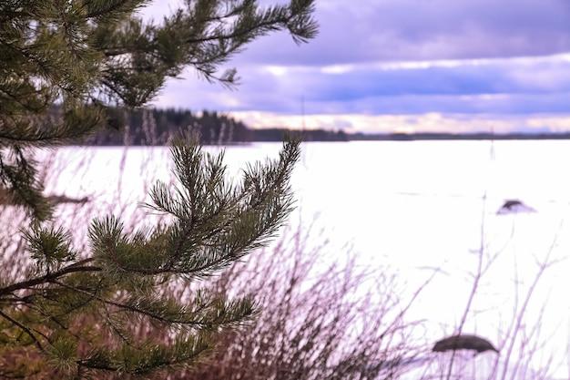 Вид большого изображения ледяного озера зимнего леса. панорамный пейзаж с заснеженными деревьями, голубым небом с облаками, удивительным замерзшим озером с ледяной водой. фон сезонная зима пасмурно прохладная погода. копировать пространство
