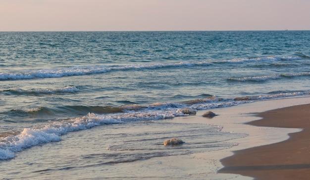 Большая медуза лежит на берегу пляжа. небо и вода. медузы на пляже утром. медуза rhopilema nomadica в средиземном море на берегу. медузу прибило к берегу