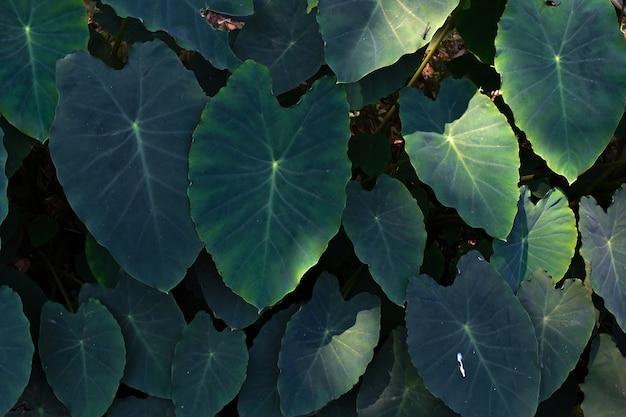 큰 잎 식물 야외