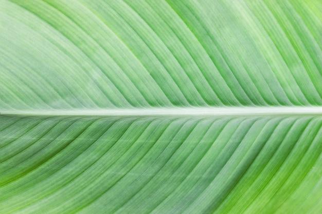 큰 잎 텍스처가 눈에 보이는 홈으로 닫힙니다.