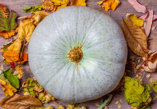 Large light green pumpkin on old wooden retro with dry autumn leaves, top view