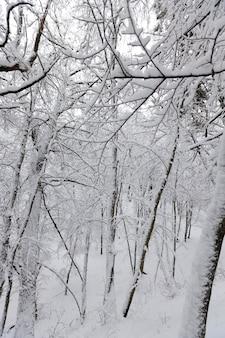 Большое количество голых лиственных деревьев в зимний период, деревья покрыты снегом после заморозков и снегопадов, в парке или зимнем лесу сугробы, на снегу останутся следы.