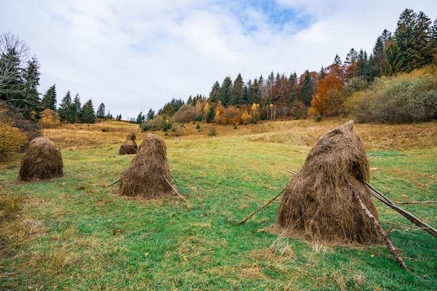 흐린 회색 날씨에 젖고 신선한 풀이 있는 녹색 초원에 마른 건초가 있는 많은 건초 더미