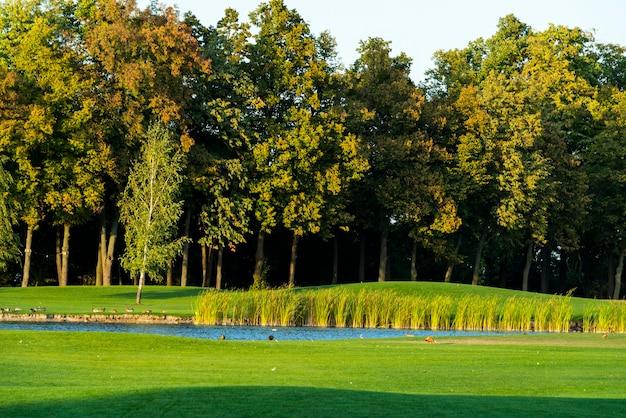 手入れの行き届いた大きく開いた牧草地で、茂みと茂みが造園で飾られています