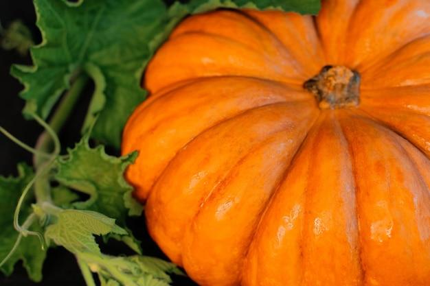 Большая оранжевая тыква с листьями и орехами лежит на черном фоне. фото высокого качества