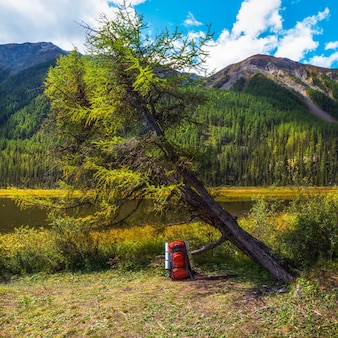 Large orange tourist backpack under an autumn tree on the lake shore. a tourist stop. rest time, camping life concept.