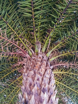 Большая пальма в ботаническом саду