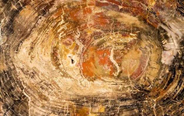 磨かれた石化した木の大きな部分。背景、テクスチャ